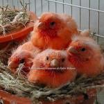 canary4.jpg
